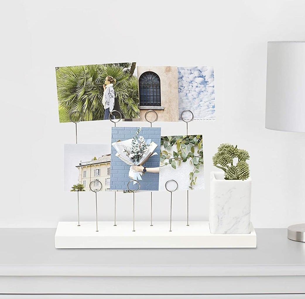 Several photos and a plant in the holder