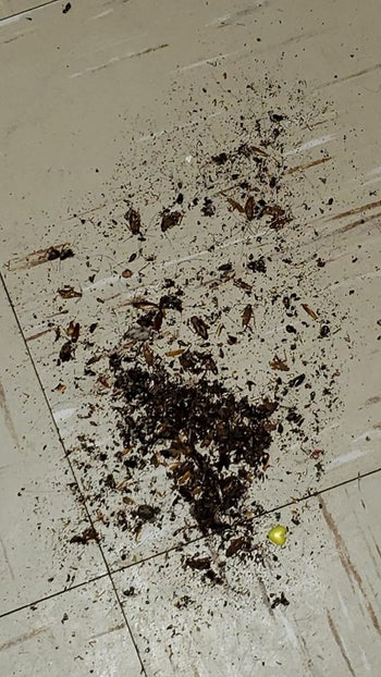 Reviewer photo of a pile of dead cockroaches