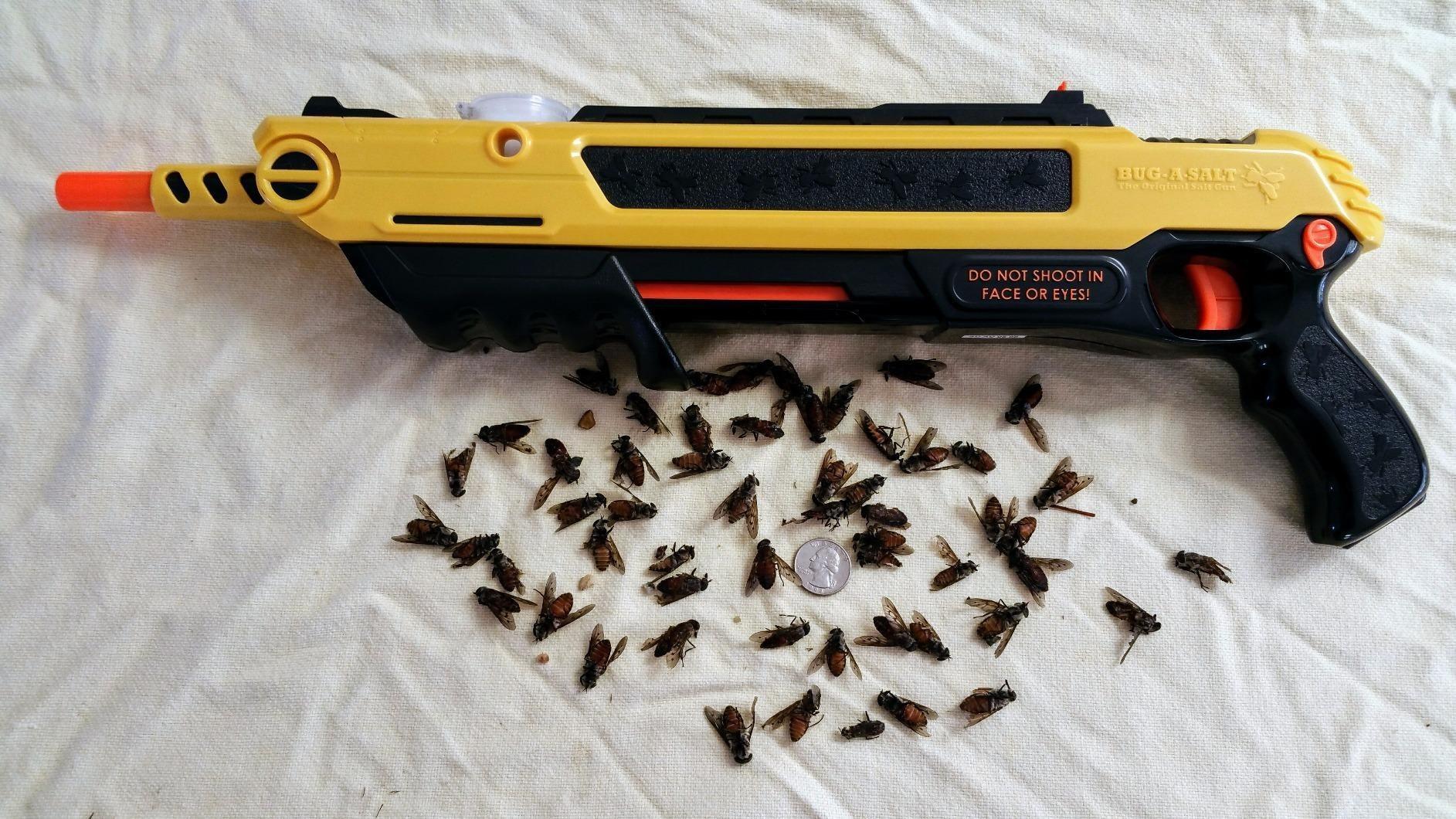 gun shown with many dead flies