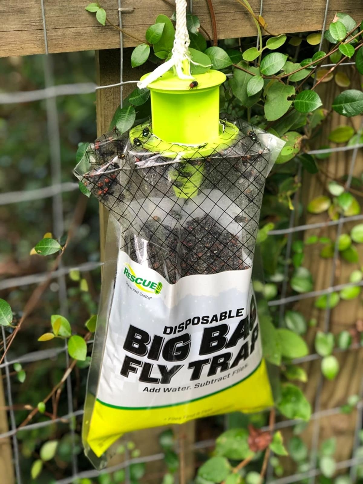 The bag hung outside and filled with tdead flies
