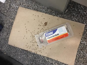 Reviewer image showing dead ants in and around the trap