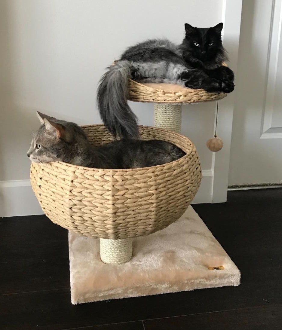 Two cats using the cat perch