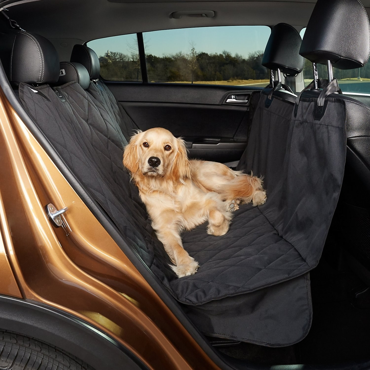 Dog sitting on the seat cover