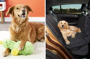 Side by side of dog with stuffed duck toy and dog lying on car seat protector in the backseat