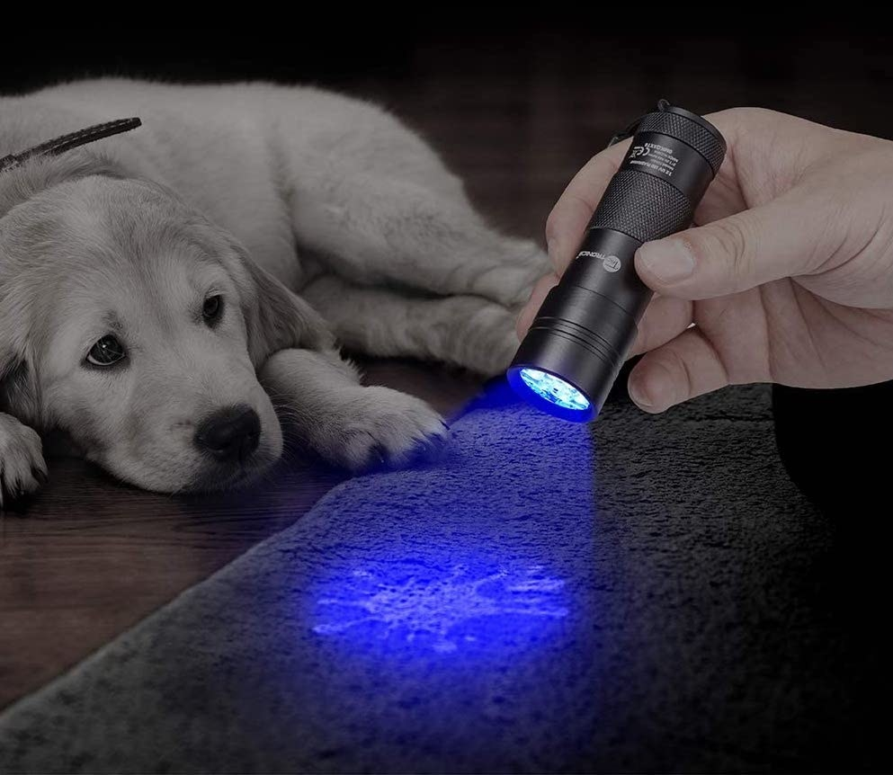The led light being used to show a urine stain