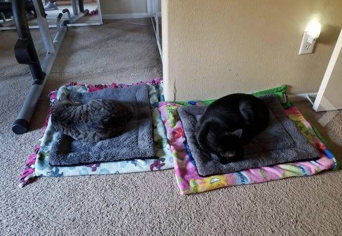Two cats sleeping on their own self-warming mats
