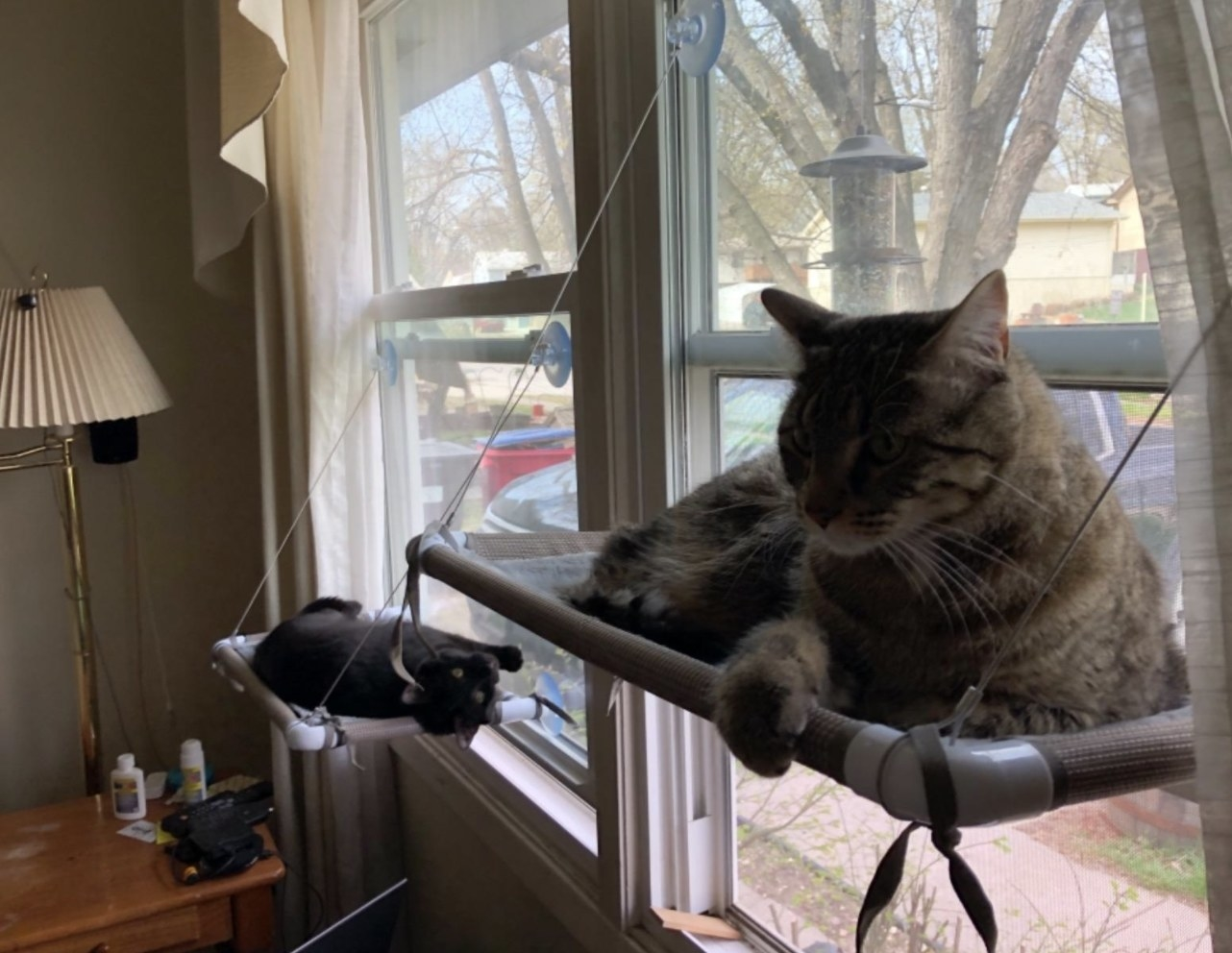 Two cats lounging on their own window hammocks