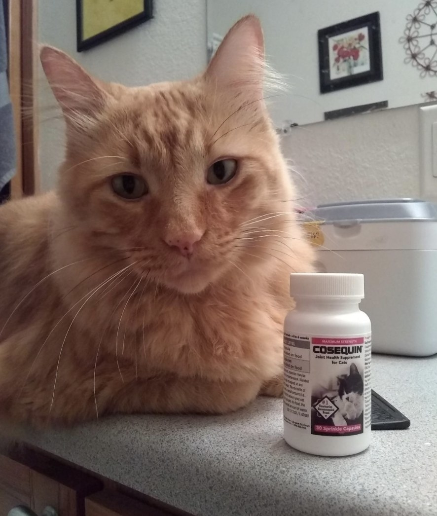 An orange cat sitting next to joint supplements