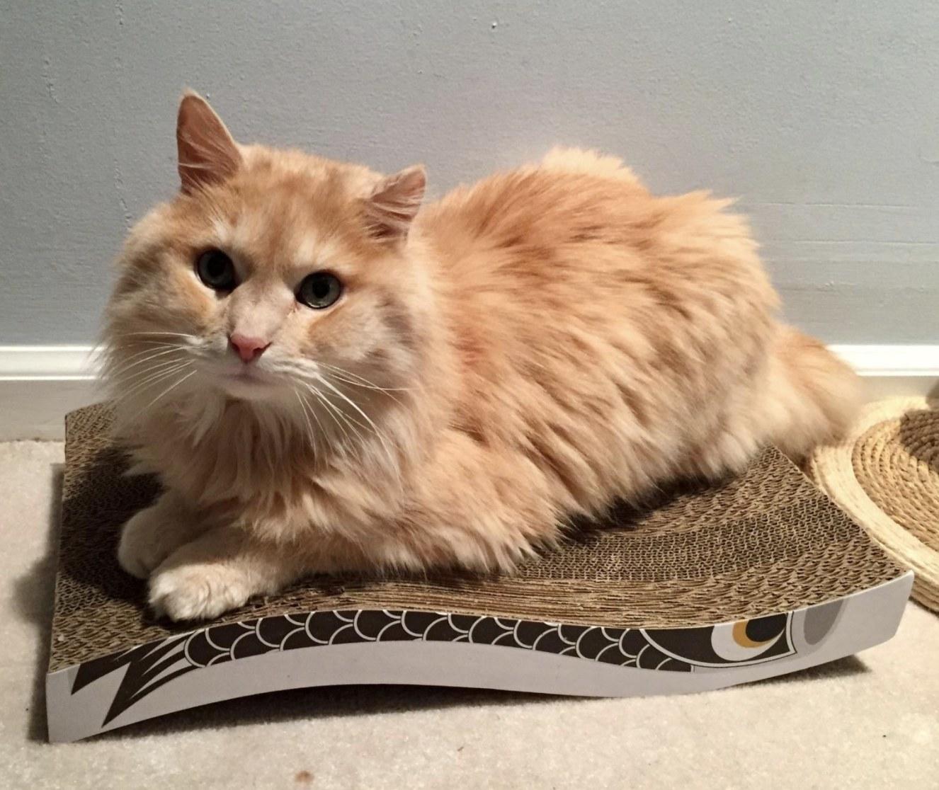 An orange cat sitting on top of a cardboard cat scratcher