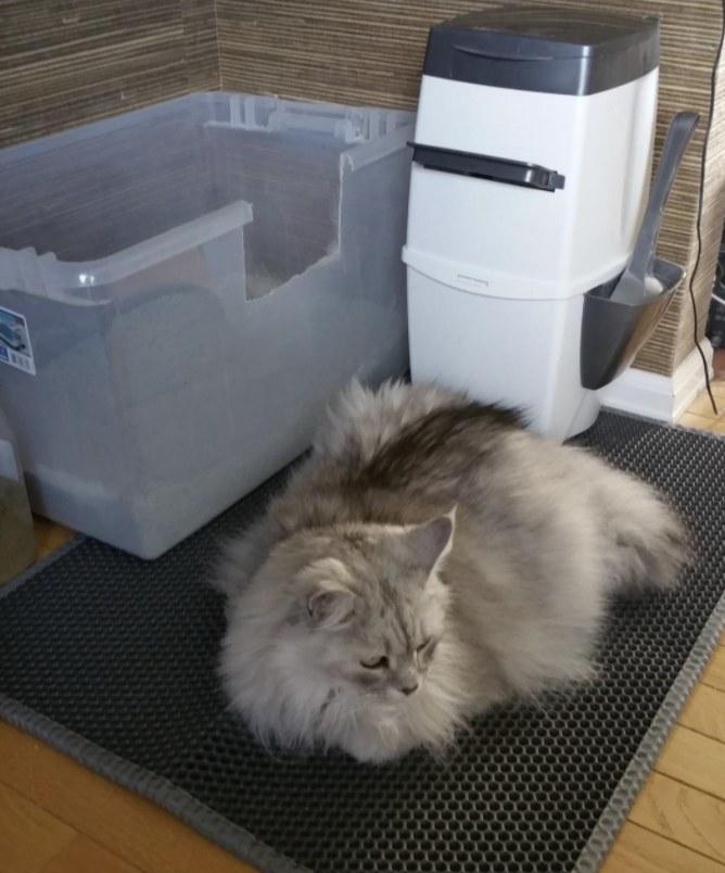 A fluffy cat laying on a cat litter mat