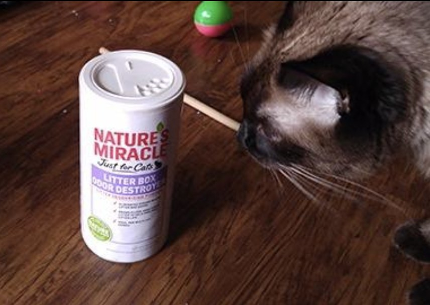 A cat looking at a bottle of litter box odor destroyer