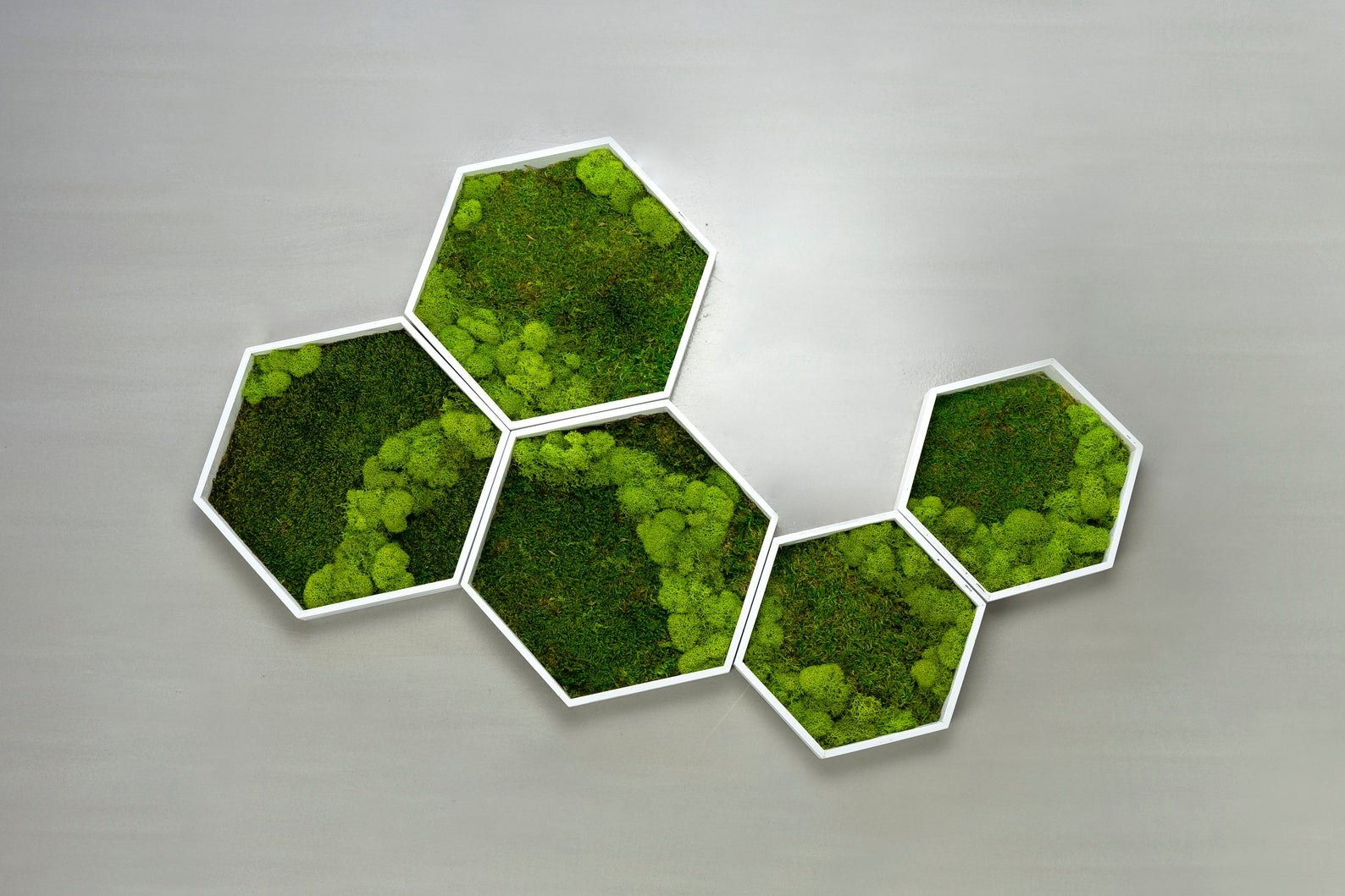 Five connected hexagons of different sizes filled with preserved moss on a wall