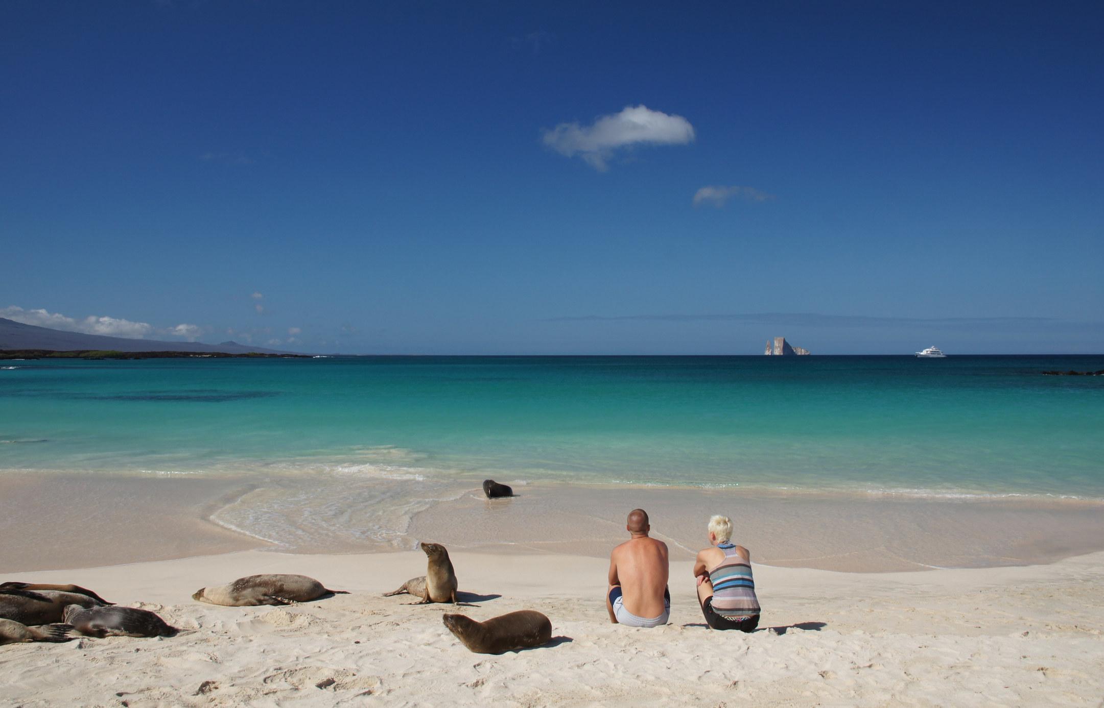 A couple sitting on a white sand beach next to wild sea lions