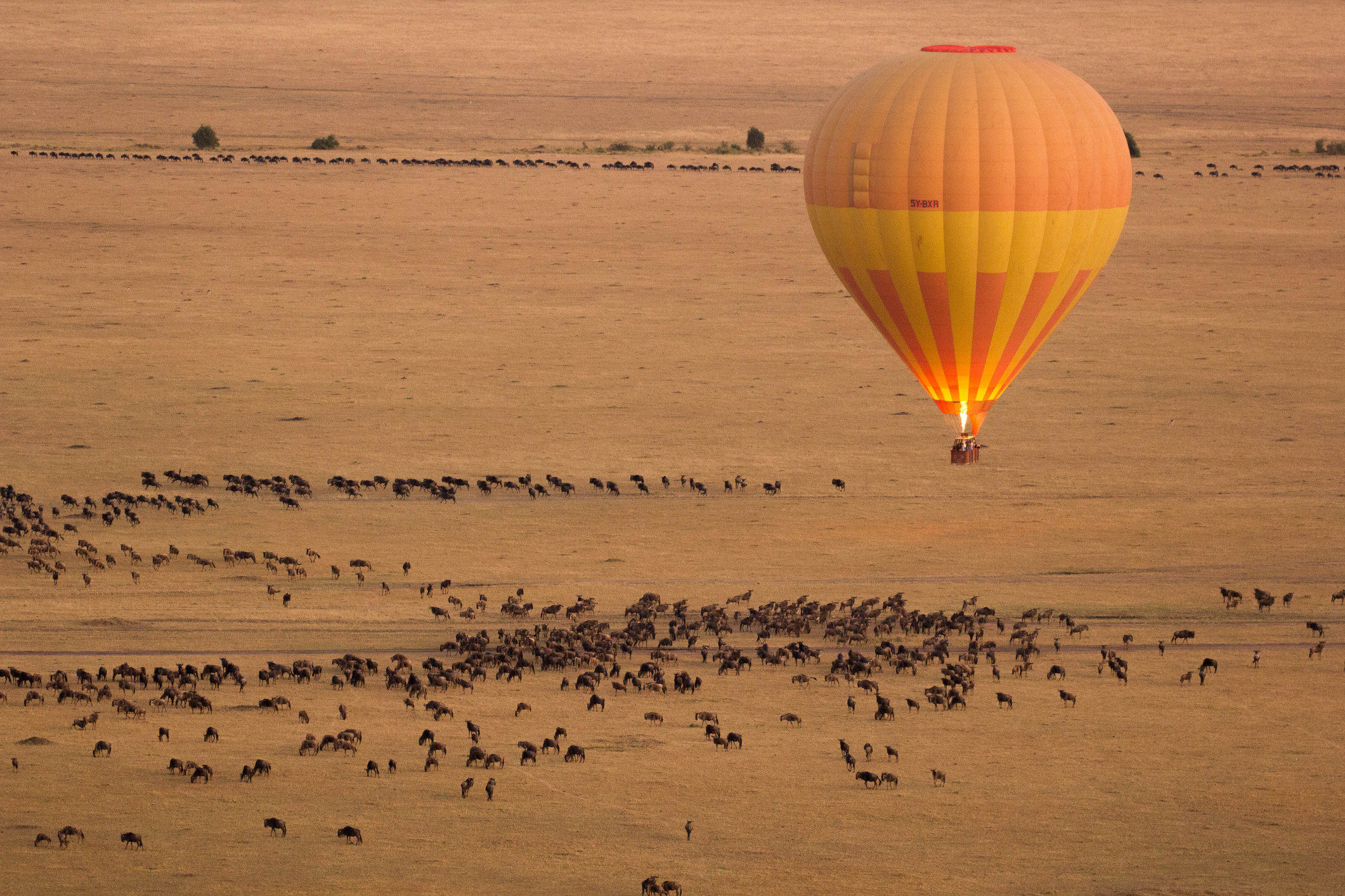 A hot air balloon hovering above a giant grassy plain covered in hundreds of animals