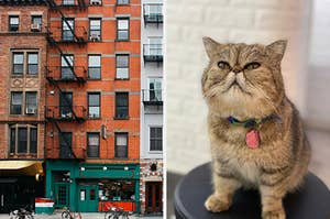 On the left, the exteriors of New York City apartment buildings, and on the right, a persian cat sitting on a stool