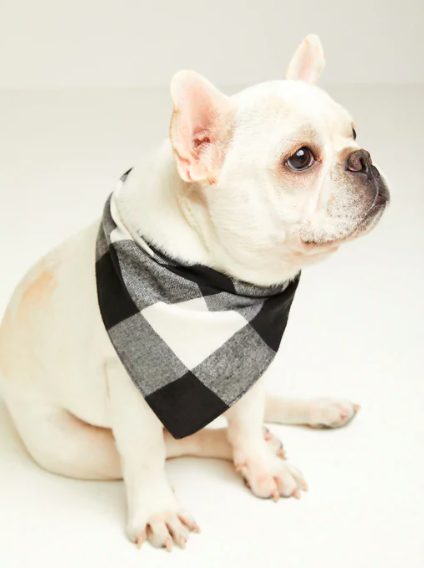a dog with a scarf on