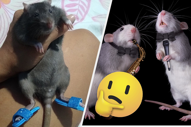 Qual roedor de chinelinho é você?