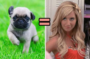 A baby pug on the left and Sharpay Evans on the right