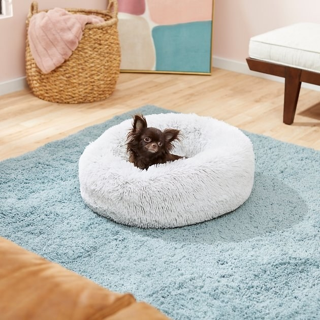Small dog sitting in a Frisco Eyelash Cat & Dog Bolster Bed