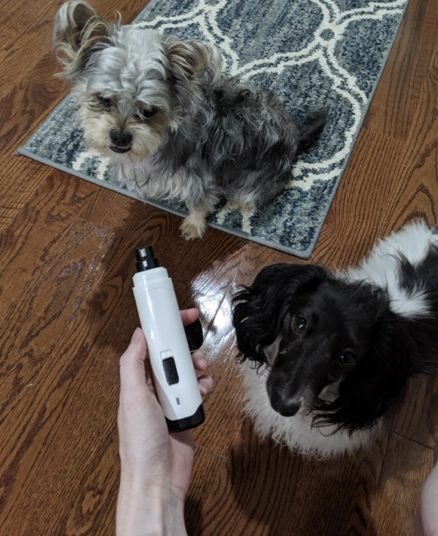 Person is holding a white nail trimmer in front of two dogs
