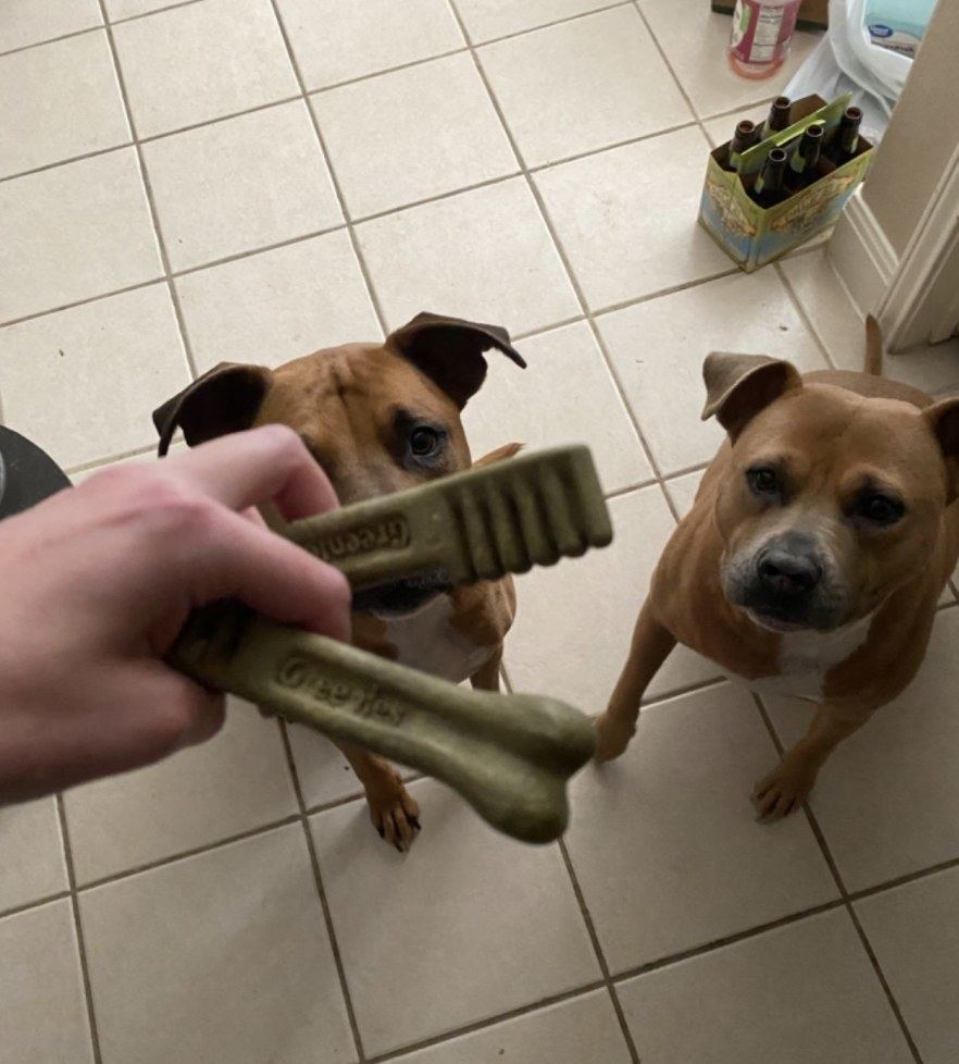 Person is holding two dental treats in front of two dogs
