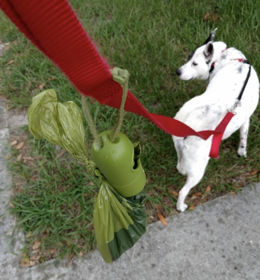 A dog walking on a leash with poop bags attached to the leash