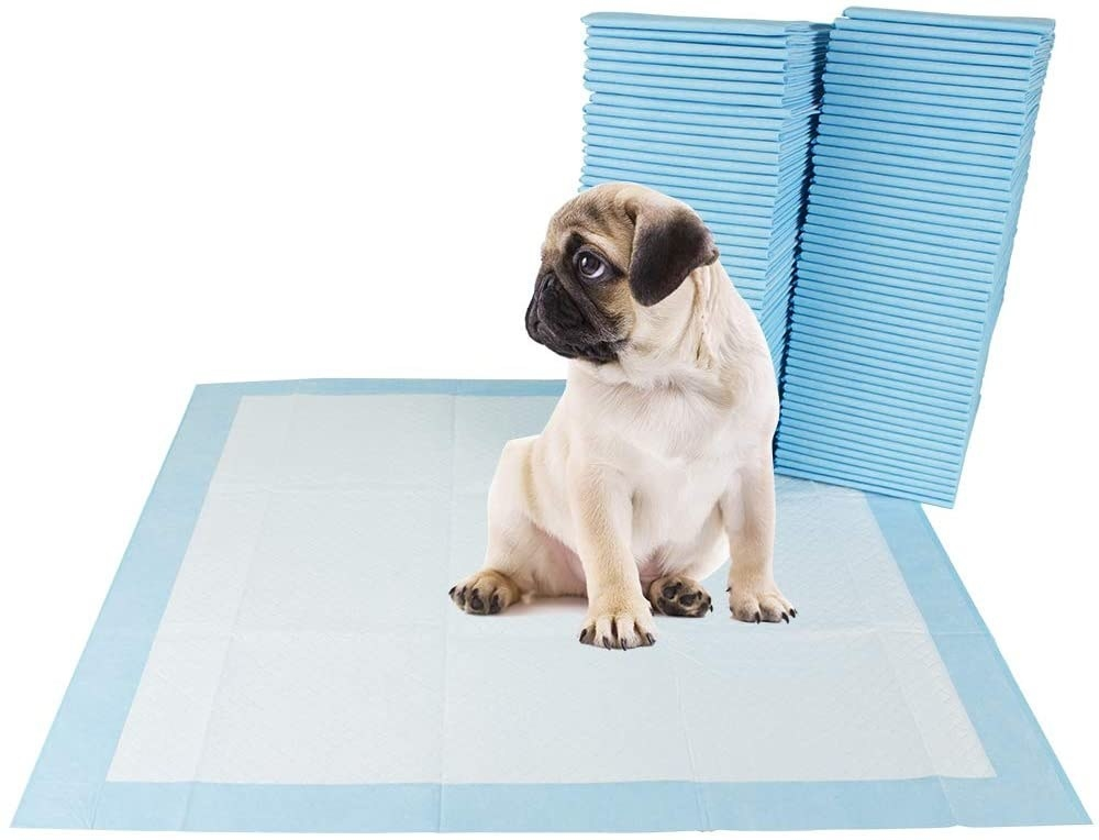 A puppy sitting on the square-shaped white pad with blue border with two stacks behind them