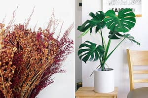 Two panels showing a preserved fall-colored floral bouquet and a tall monstera plant in a ceramic planter.