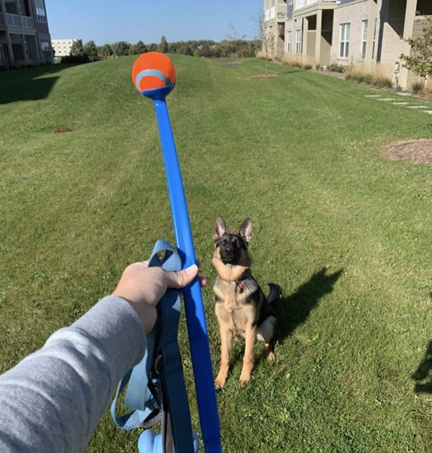 Person is holding a ball launcher in front of a dog in a field