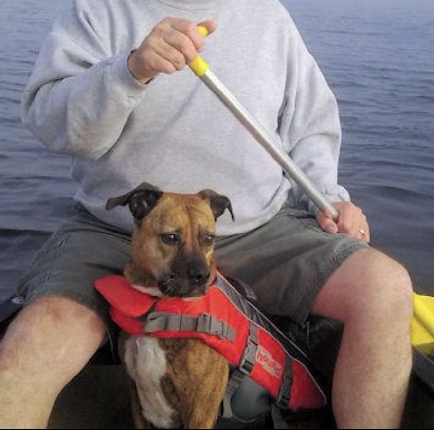 Person is sitting in a canoe with their dog wearing a life jacket