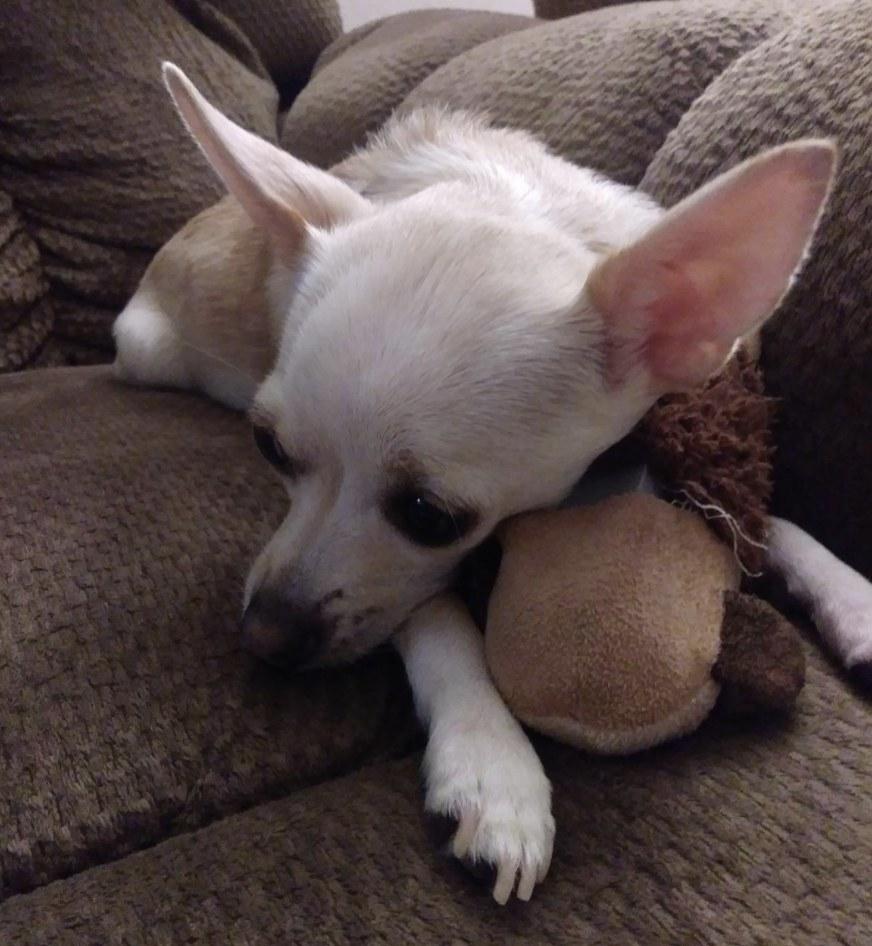 A small dog cuddling a monkey plush