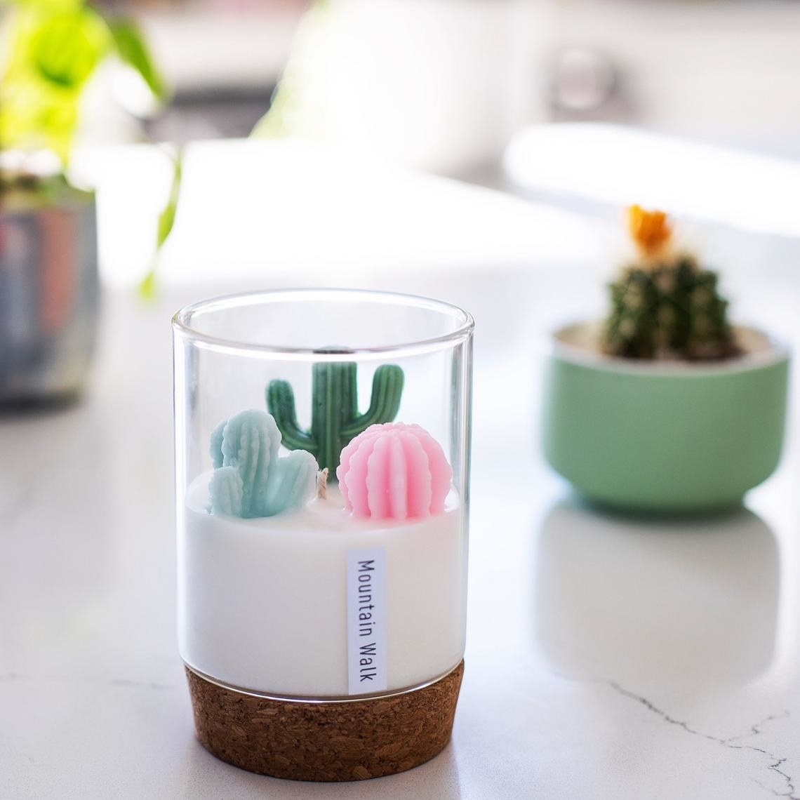 A terrarium candle on a table in front of a potted cactus