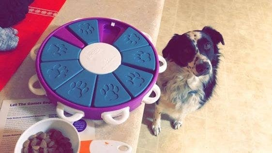 Dog next to the circular treat puzzle