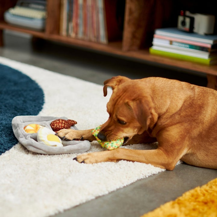 Dog biting food toy from tray