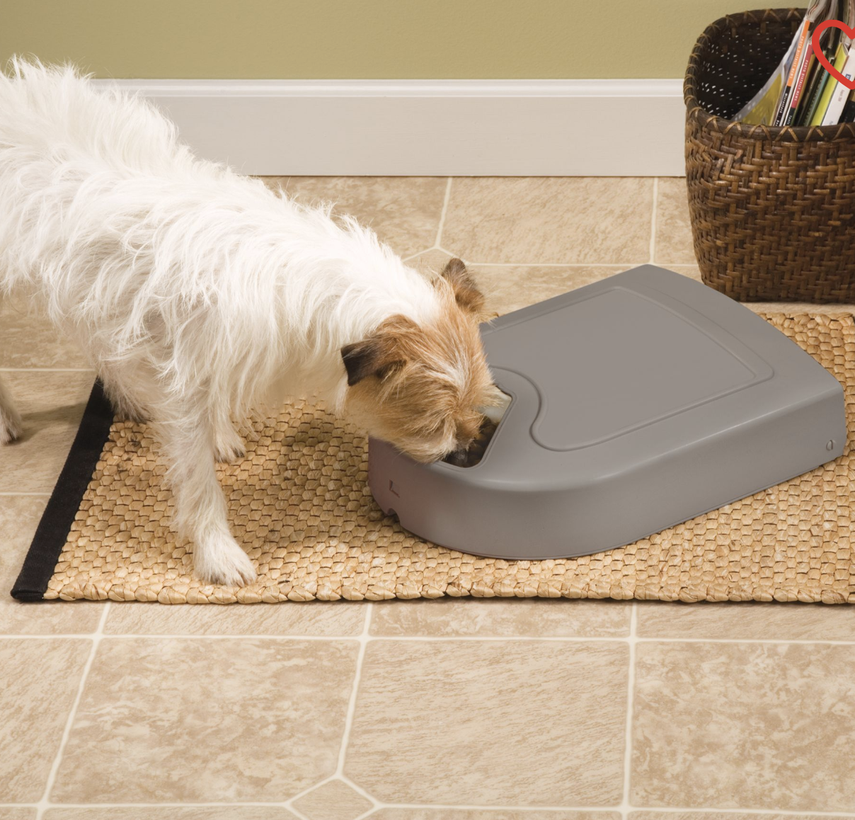 A dog eating out of a gray food dispenser on the floor