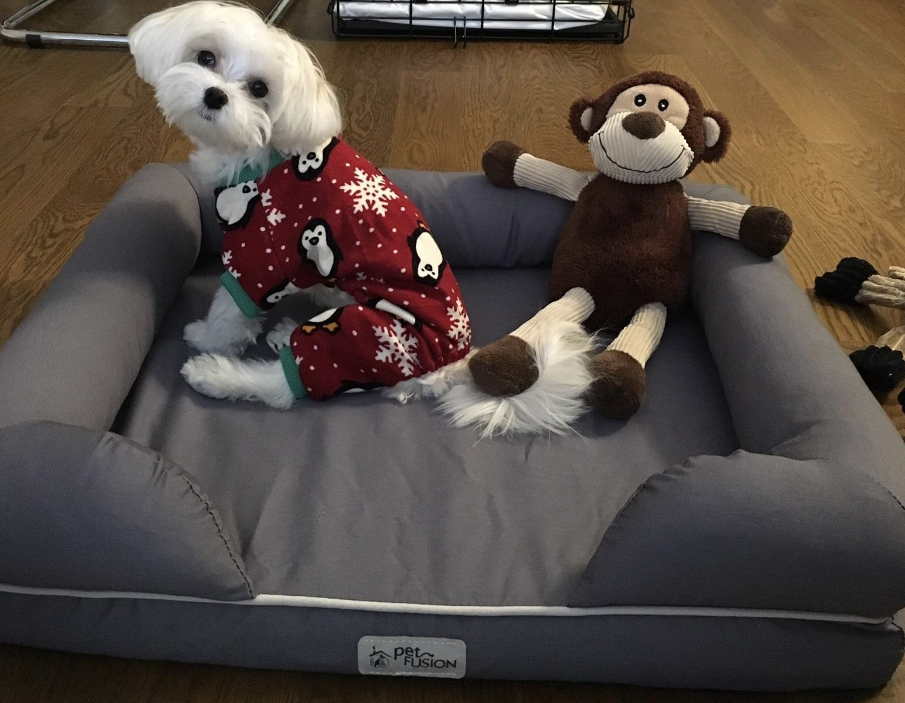 a white dog with holiday pajamas on sitting on a grey dog bed