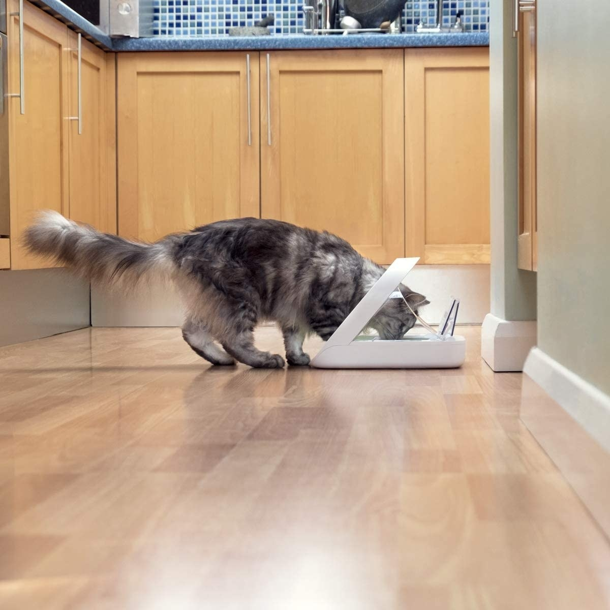 gray cat eating out of a white automatic feeder in the kitchen