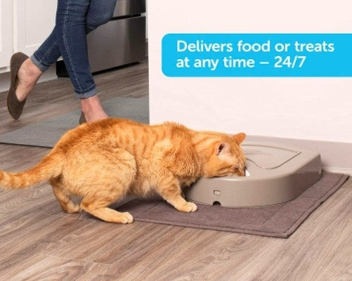 cat eating out of a automatic cat feeder in a kitchen