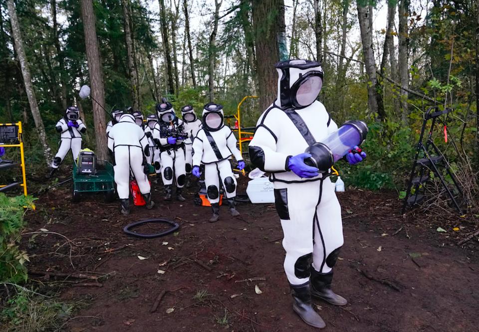 Several people in bodysuits walk around murder hornet site
