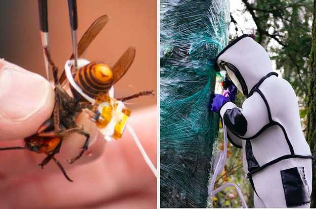 These Pictures Of Scientists Demolishing A Murder Hornet Nest Are An IRL Sci-Fi Novel Come True