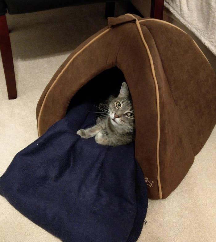 a grey striped cat inside a brown plush pet tent