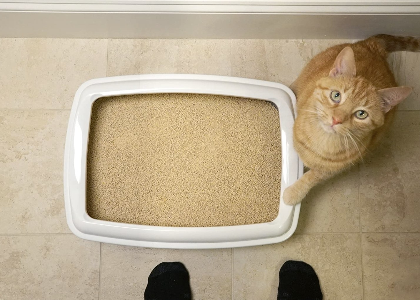 an orange tabby cat next to a litter box on the floor