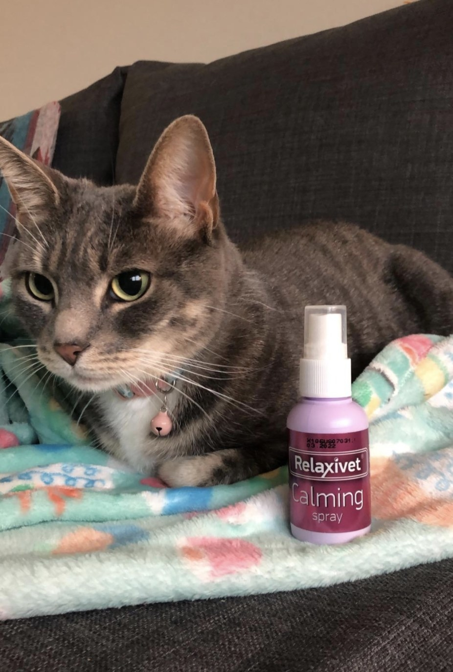 a striped cat laying on a blanket with the relaxivet calming spray next to them