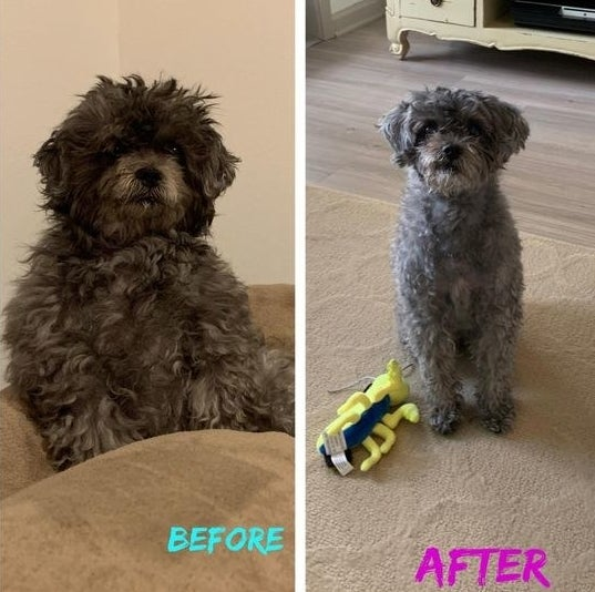 reviewer's before and after of scruffy looking dog and then neatly groomed