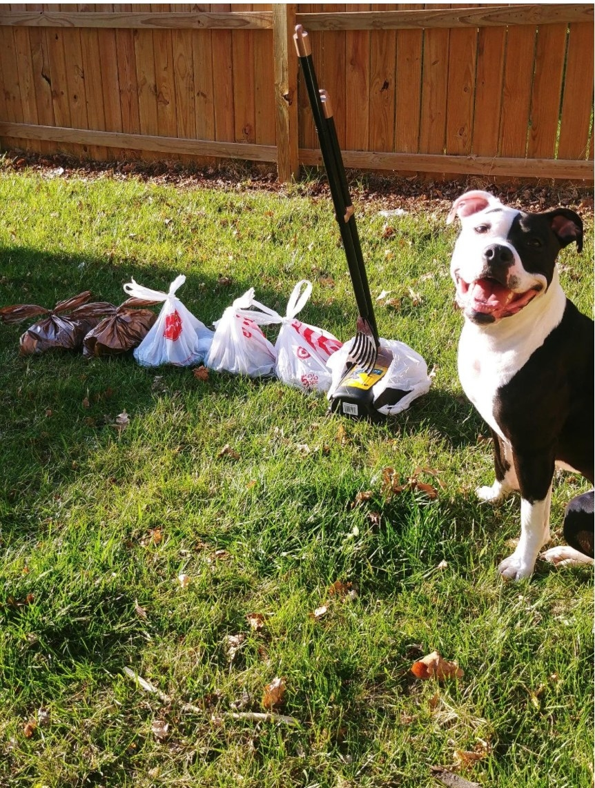 A dog sitting happily next to the pooper scooper and several tied up bags