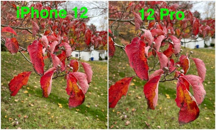 Photos of leaves taken by each the iPhone 12 and 12 Pro.