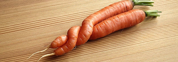 Two carrots that grew together and wrapped around one another
