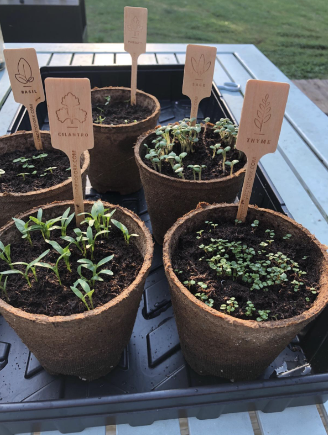 Reviewer photo of sprouted plants from gardening kit