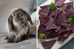 在左边,用软盘耳朵的兔子,并在右边,蓝色玉米饼芯片