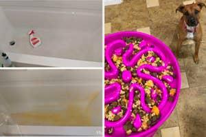 在左边,一个之前有和没有锈渍和喷雾瓶清洁剂的桶后。在右侧,一只狗正从缓慢喂料钵喂